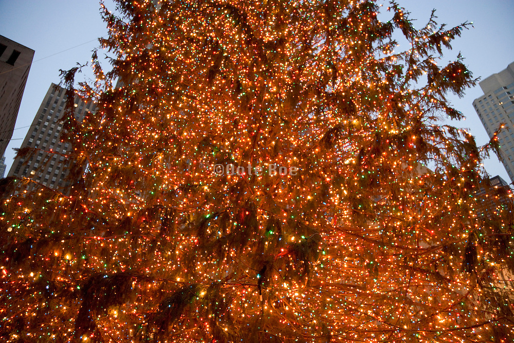 close up of the Rockefeller Center Christmas tree in New York