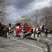 Horse and Carriages in Central Park, Manhattan, as cyclist  ride around the parks driveway. New York, USA. 26th March 2013. Photo Tim Clayton