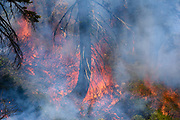 French Meadows Prescribed Burn Project, Tahoe National Forest, California, in partnership with The Nature Conservancy