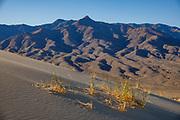 Granite Peak seen from Kelso Dunes, Mojave National Preserve, near the town of Baker, in San Bernardino County, California, USA.
