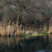 Sunlight on reeds and trees at the water's edge at the Scarborough Bluffs in Toronto.