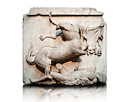 Sculpture of Lapiths and  Centaurs battling from the Metope of the Parthenon on the Acropolis of Athens no XXVIII. Also known as the Elgin marbles. British Museum London. .<br /> <br /> If you prefer to buy from our ALAMY STOCK LIBRARY page at https://www.alamy.com/portfolio/paul-williams-funkystock/greco-roman-sculptures.html . Type -    Elgin    - into LOWER SEARCH WITHIN GALLERY box - Refine search by adding a subject, place, background colour, etc.<br /> <br /> Visit our ROMAN WORLD PHOTO COLLECTIONS for more photos to download or buy as wall art prints https://funkystock.photoshelter.com/gallery-collection/The-Romans-Art-Artefacts-Antiquities-Historic-Sites-Pictures-Images/C0000r2uLJJo9_s0