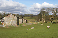 barn in Cumbria in the landscape