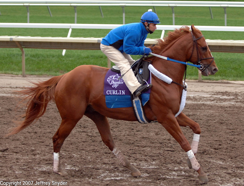 Curlin in practice two days prior to winning the Breeders Cup Classic at the Breeders Cup 2007 World Championships