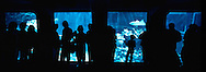 Visitors to The Living Seas aquarium at walkway windows leading into the observation deck. EPCOT, Buena Vista, Florida