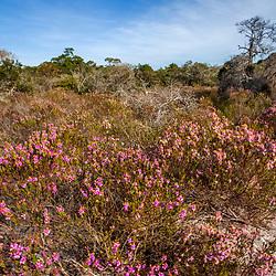 """""""Paisagem (Cenário) fotografado em Linhares, norte do Espírito Santo -  Sudeste do Brasil. Bioma Mata Atlântica. Registro feito em 2018.<br /> ⠀<br /> ⠀<br /> <br /> <br /> <br /> <br /> ENGLISH: Landscape photographed in Linhares, North of Espírito Santo - Southeast of Brazil. Atlantic Forest Biome. Picture made in 2018."""""""
