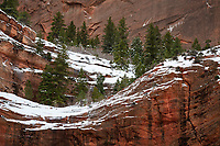 A wave of snow flows along the sandstone walls and pine trees in Zion National Park.