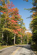 Road lined with maple trees some with red color.