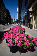 Full Sets | Fifth Avenue Blooms