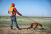 Vizsla Club of Colorado Licensed Hunt Test
