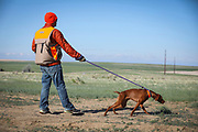 SHOT 5/9/20 8:42:02 AM - Various pointing breeds compete in the Vizsla Club of Colorado Licensed Hunt Test Premium at the Rocky Mountain Sporting Dog Club Grounds in Keenesburg, Co. (Photo by Marc Piscotty / © 2020)