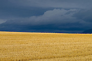 Stormy sky over hay field with mountains in background.