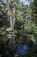 Singapore Botanic Garden is a major visitor attraction in Singapore boasting an array of botanical & horticultural offerings with a rich plant collection of worldwide significance. Enhancing these resources are recreational facilities, educational displays and events for visitors surrounded by nature. The garden was first set up by Stamford Raffles, who was the founder of Singapore as well as being a naturalist at Fort Canning.  The original venue closed in 1829 and moved to the present site in 1859. In 2015 the Gardens received inscription as UNESCO World Heritage Site.