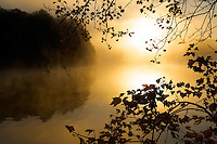 """Morning Mist""  .Autumn views at Walden Pond.  The sun shines through mist at sunrise."