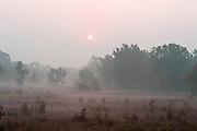 Early morning sunrise and mist, Bandhavgarh National Park