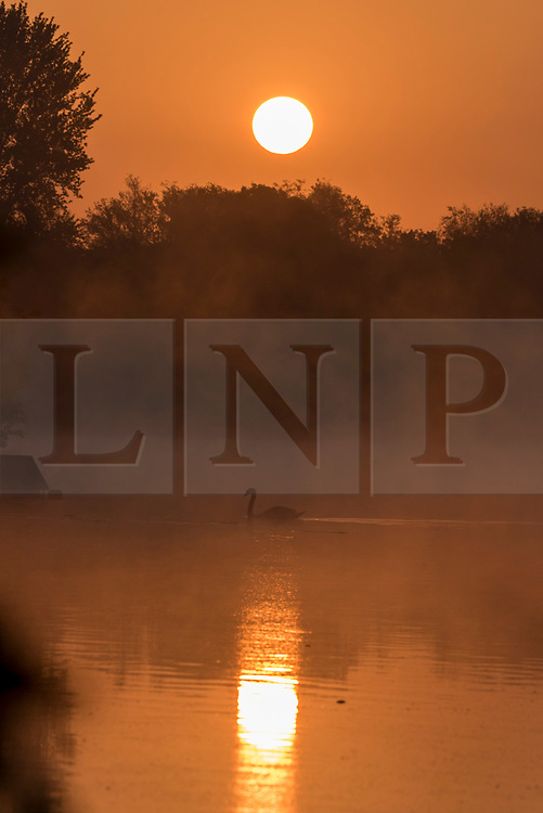 © Licensed to London News Pictures. 07/05/2020. RICKMANSWORTH, UK.  A swan passes by as the sun rises over Rickmansworth Aquadrome in north west London.  The weather forecast is for temperatures over 20C for the next few days.  Photo credit: Stephen Chung/LNP