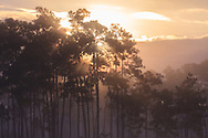 The sun rises behind a fog-enshrouded island in Long Pine Key pond in Everglades National Park, Florida. WATERMARKS WILL NOT APPEAR ON PRINTS OR LICENSED IMAGES.