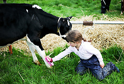 © Licensed to London News Pictures.26/08/15<br /> Egton, UK. <br /> <br /> Ella Brown, 6, from Ugthorpe washes her calf, 'Gloria', at the 126th Egton Show in North Yorkshire. <br /> <br /> Egton is one of the largest village shows in the country and is run by a band of voluntary helpers. <br /> <br /> This year the event featured wrought iron and farrier displays, a farmers market, plus horse, cattle, sheep, goat, ferret, fur and feather classes. There was also bee keeping, produce and handicrafts on display.<br /> <br /> Photo credit : Ian Forsyth/LNP