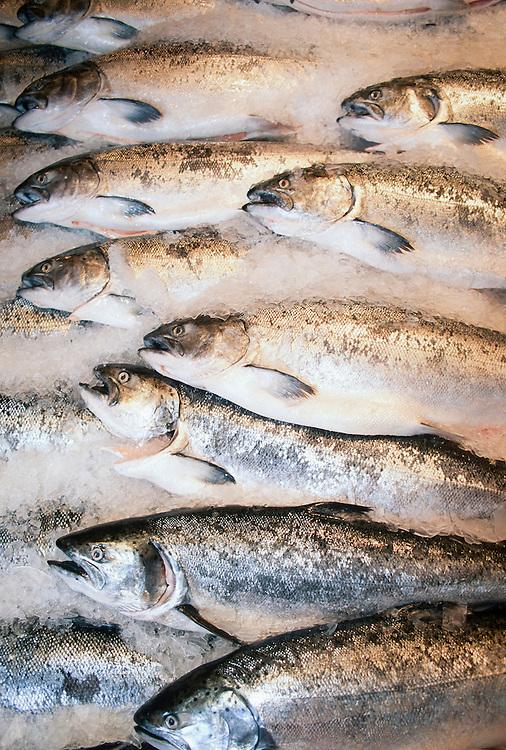 Alaska. Silver salmon on ice.