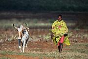 Local man & zebu<br /> South Madagascar<br /> MADAGASCAR