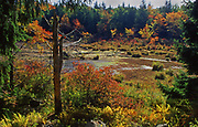 Fall color, wild shrubs, lake, Promised Land State Park, Pike Co., PA