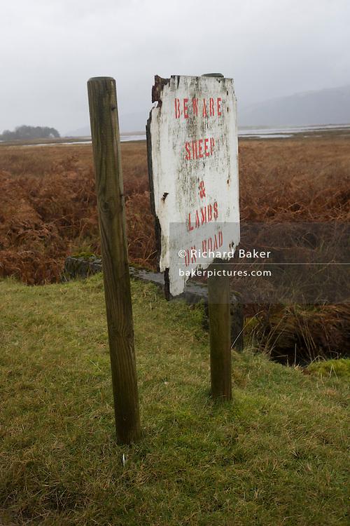 Drivers' warning of sheep and lambs, Pennyghael, Isle of Mull, Scotland.