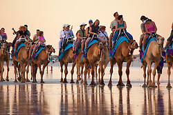 The Blue Camels head home on Broome's Cable Beach.  Low tide brings beautiful reflections in the wet sand.