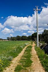 La primavera nella campagne comincia a diffondersi attraverso la crescita dell'erbetta, di fiori creando un suggestivo contrasto con gli alberi ed il cielo. L'energia ormai indispensabile, passa attreveso i più sperduti punti della campagna