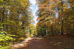 Footpath passing through forest, Bavaria, Germany
