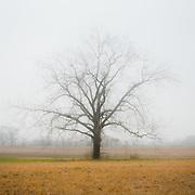 Somewhere along rural AL 134 in Dale County, AL