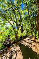 A couple bicycle down a verdant tree lined road, Los Poblanos Historic Inn & Organic Farm, Los Ranchos de Albuquerque, Albuquerque, New Mexico USA