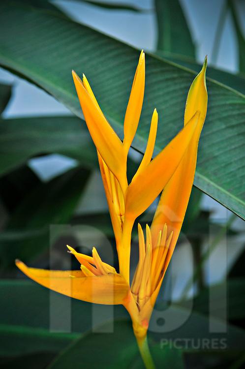 Vibrant orange flower in Khanh Hoa Province, Vietnam, Southeast Asia