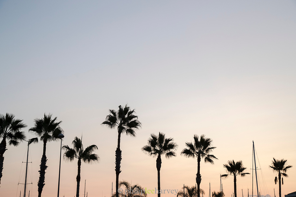 Palm trees and ship masts on sky at dusk over harbor of Golfe-Juan, France.