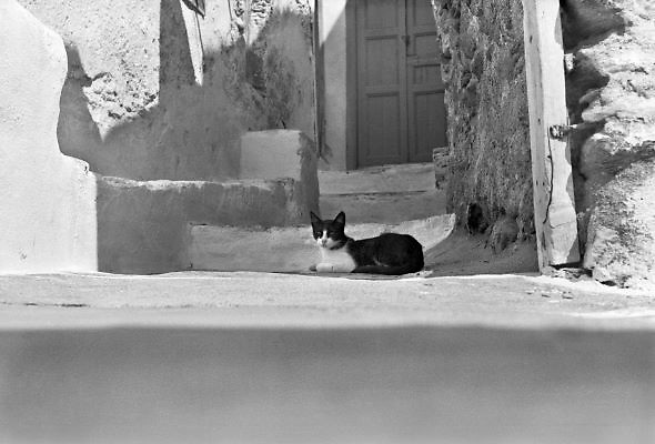 Griekenland, Ios, 25-9-1973Kat, poes ion een straatje van het Griekse eiland Ios. Tegenwoordig wordt dit eiland het party-eiland genoemd.Foto: Flip Franssen/Hollandse Hoogte