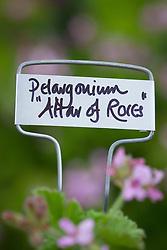 Aluminium plant labels