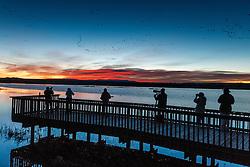 Photographser on boardwalk, Bosque del Apache National Wildlife Refuge, New Mexico, USA.