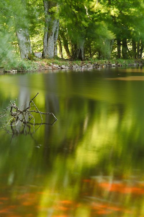 Fresh greens from leaves reflecting on water, PNR du Livradois Forez; Etang de la Fargette, St. Germain L'Herm, Auvergne, France