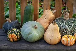 Display of harvested pumpkins on a bench