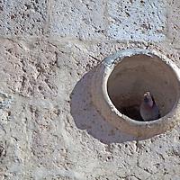 South America, Peru, Arequipa. Pigeon Hole at  San Juan de Yanahuara in Arequipa.