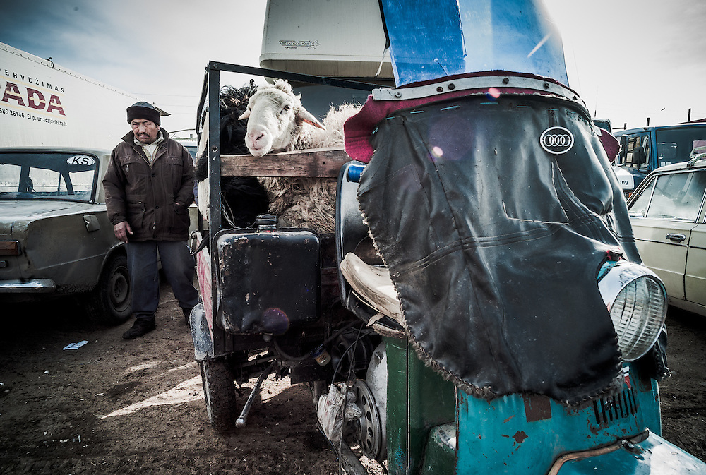 A buyer finishes loading his sheep onto the back of a 3-wheeled motor trike.