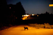 A cat crossing a street during a night scene in Oberursel-Stierstadt illuminated by the moon.