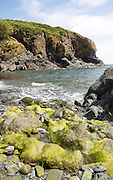 Rocky cove at Cadgwith, Lizard peninsula, Cornwall, England, UK