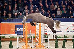 062, Kingston E<br /> KWPN Stallionshow - 's Hertogenbosch 2018<br /> © Hippo Foto - Dirk Caremans<br /> 01/02/2018