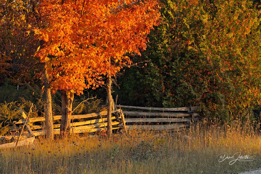 Split-rail fence and maple trees, Manitoulin Is. Mindemoya, Ontario, Canada