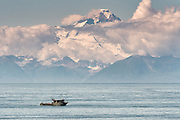 A fishing charter boat speeds along in the Cook Inlet with the Chigmit Mountains behind at Anchor Point, Alaska.