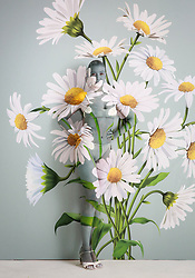 EDITORIAL USE ONLY<br /> Daisy Lowe has been camouflaged into a wall of daisies by world-leading body paint artist Carolyn Roper, to showcase the Samsung QLED TV's Ambient Mode feature. The