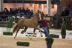 057, Marac M<br /> BWP Hengsten keuring Koningshooikt 2015<br /> © Hippo Foto - Dirk Caremans<br /> 21/01/16