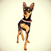 Good pet photographs help shelter dogs get adopted.
