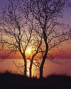 Sun setting over Lake Michigan silhouetting Balsam Poplars or Cottonwoods, Populus balsamifera, growing on sand dunes, Saugatuck Dunes State Park, Michigan.