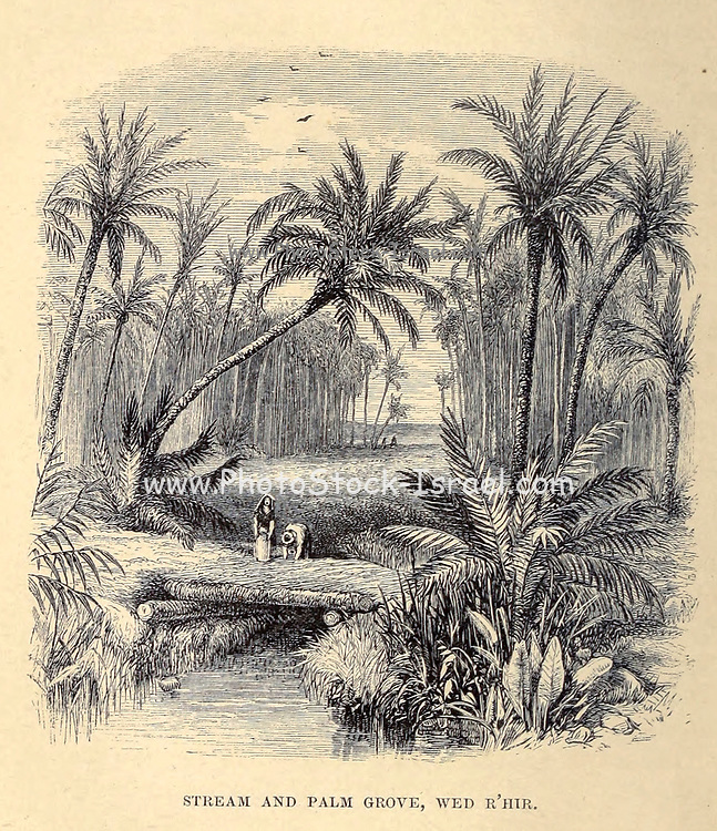 Stream and Palm-Grove, Wed R'hir From the Book ' Great Sahara: wanderings south of the Atlas Mountains. ' by Tristram, H. B. (Henry Baker),  Published by J. Murray in London in 1860